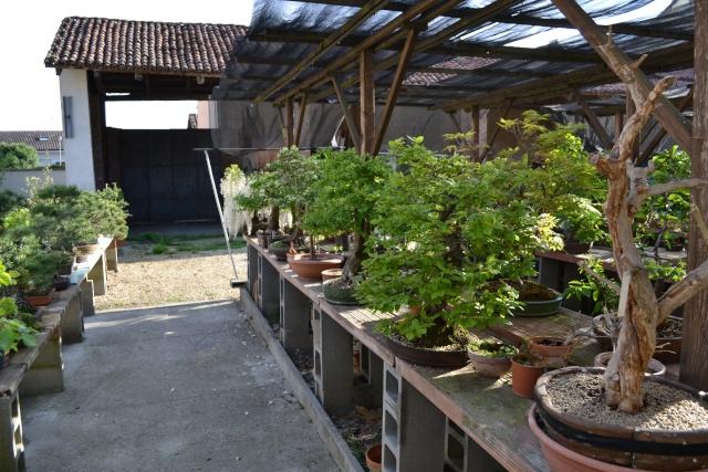 Dove coltiviamo i nostri bonsai - Pagina 3 Dsc_0119