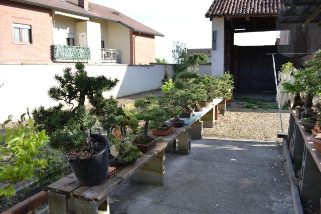 Dove coltiviamo i nostri bonsai - Pagina 3 Dsc_0120