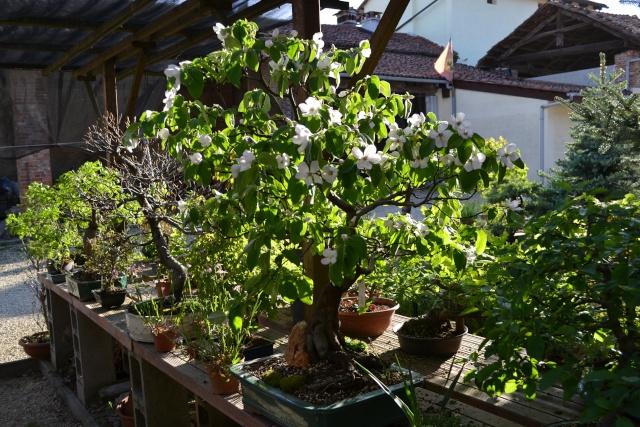 Dove coltiviamo i nostri bonsai - Pagina 3 Dsc_0124