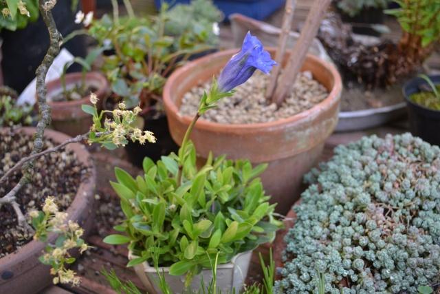 Dove coltiviamo i nostri bonsai - Pagina 3 Dsc_0126