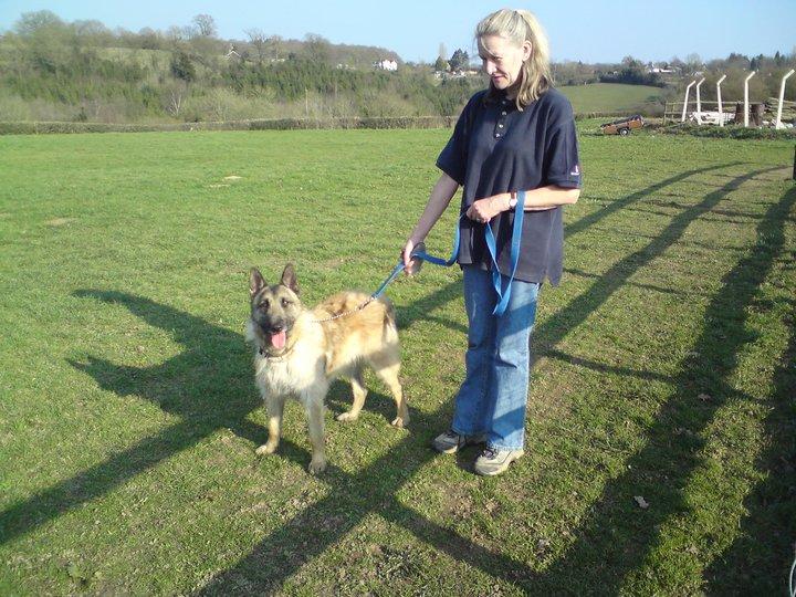 Gino - Belgian Shepherd, Dog (1 year old) Gino_w10