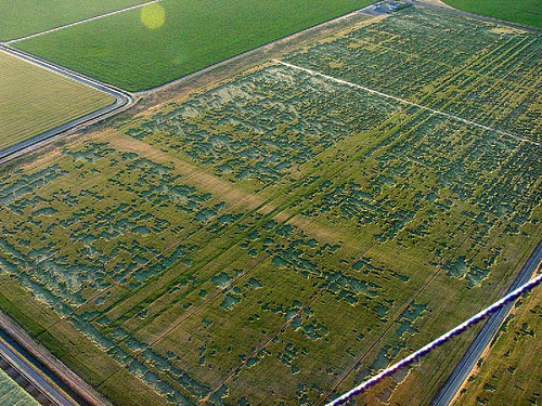 Immense crop circle en russie ?  56297910
