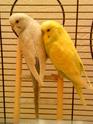 Mes bébés  Dsc01716