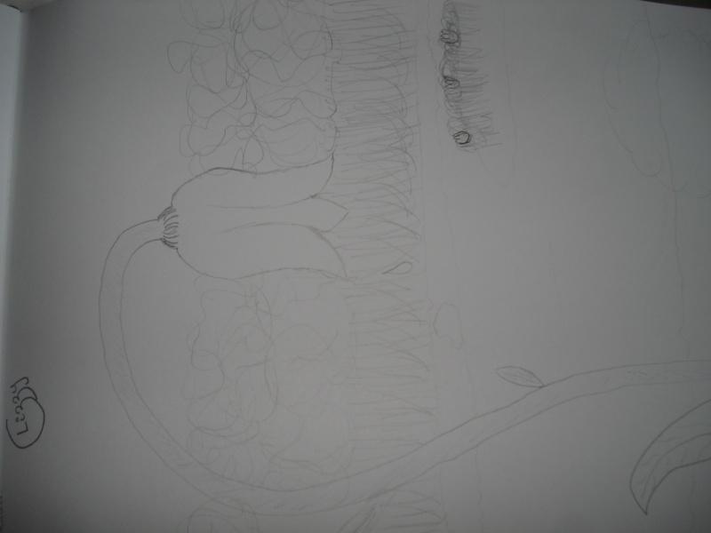 Voili mes dessinous !! - Page 2 Dsc04121