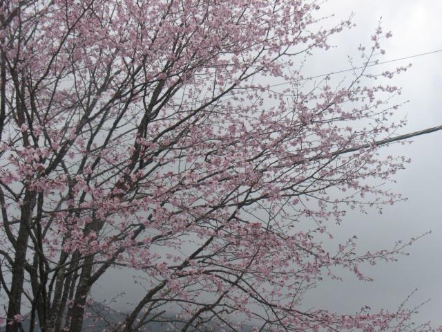 Kimono in Giappone Img_7910