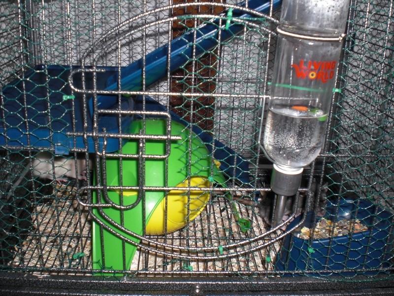 Photos de vos cages - Page 5 Cimg1813