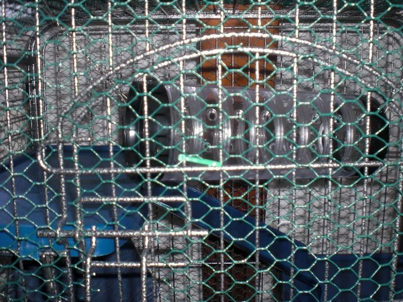 Photos de vos cages - Page 5 Cimg1815