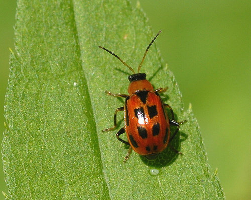 Bug Help... Bean-l10