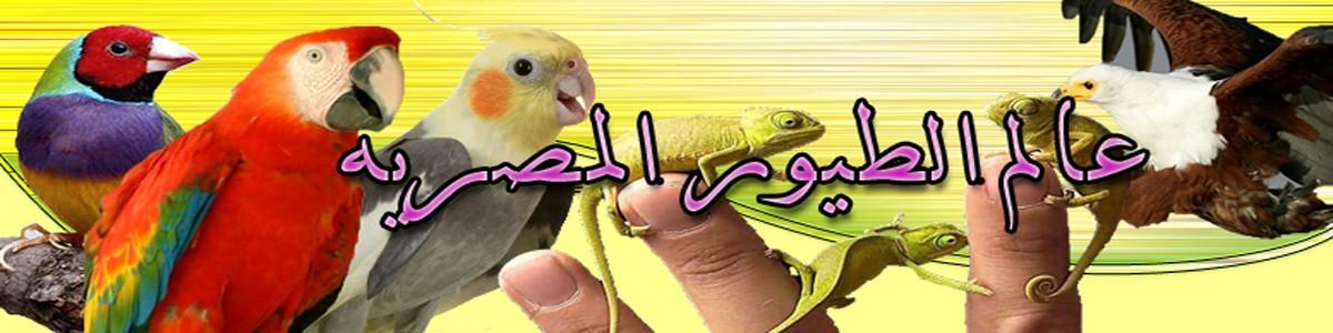 عالم الطيور المصرية