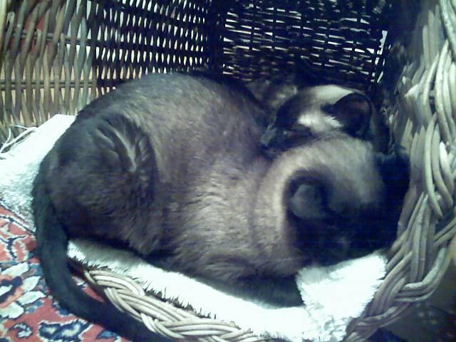 Bunbun and cats :3 24872411