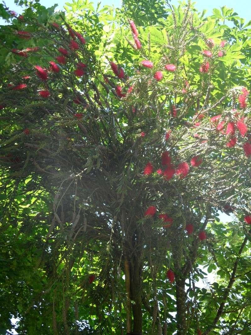 Journées des plantes d'Albertas 04510