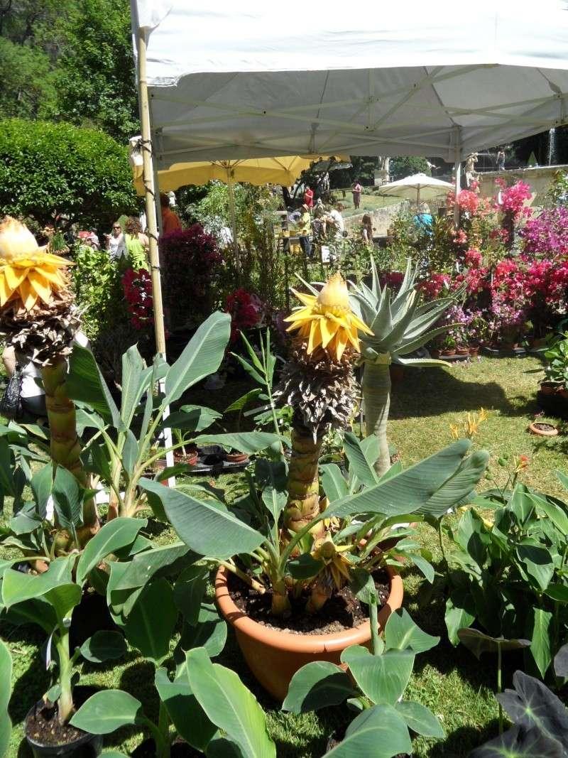 Journées des plantes d'Albertas 05910