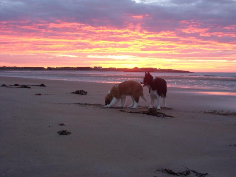 Sunrise and St Bernard(and Border Collie) 02110