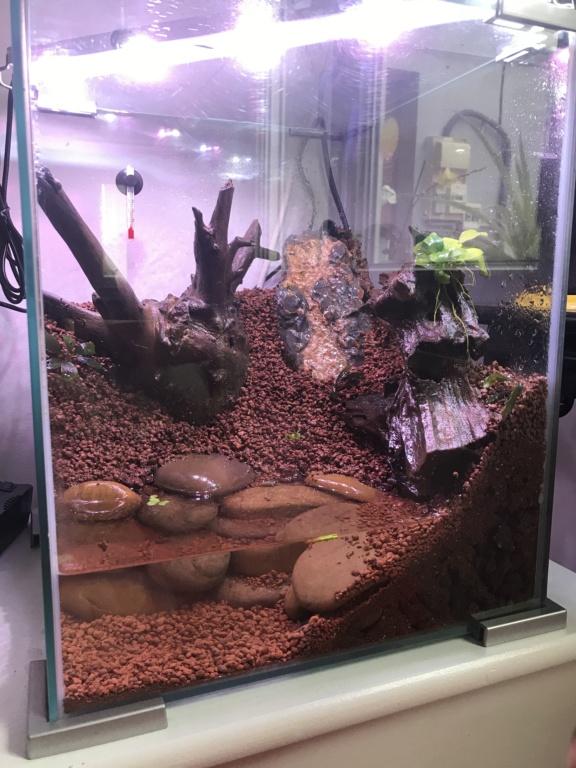 Paludarium pour des crabes vampires  384e0d10