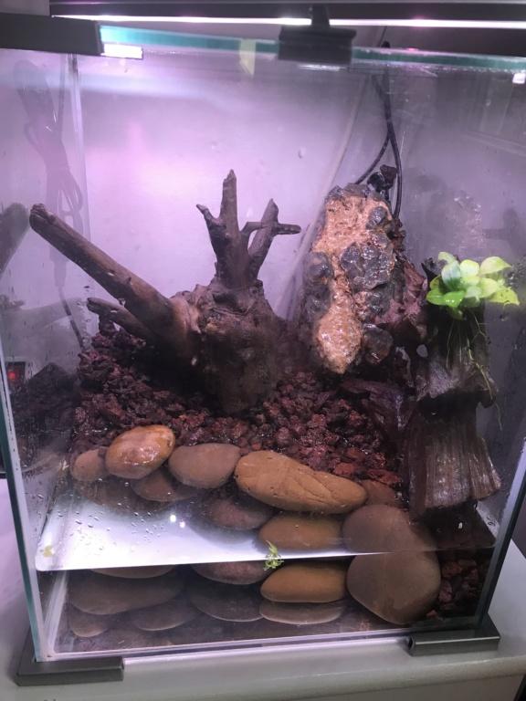 Paludarium pour des crabes vampires  8fa1b710