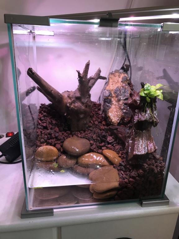 Paludarium pour des crabes vampires  Ab3ec210