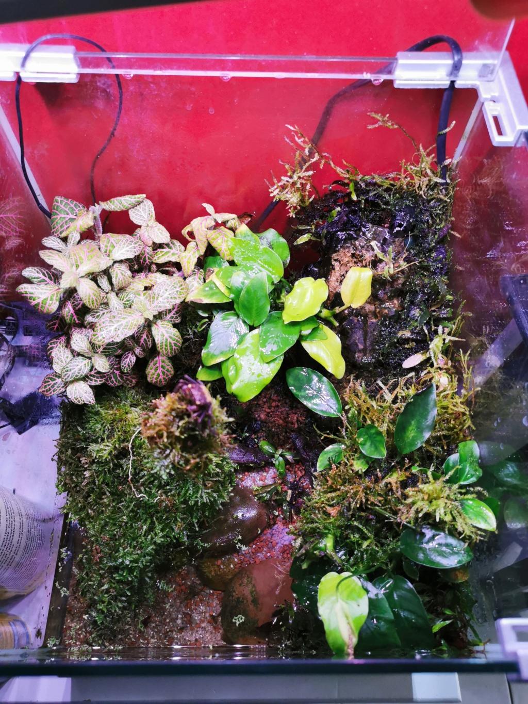Paludarium pour des crabes vampires  Img_2011