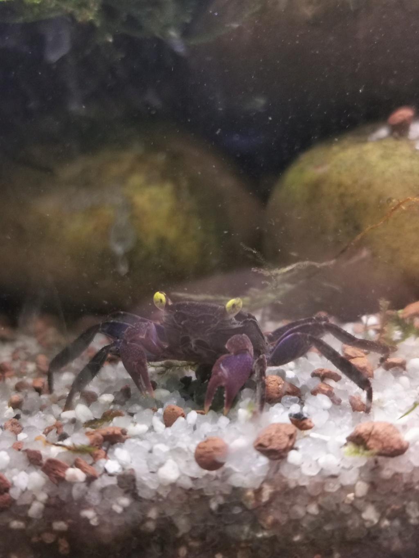 Paludarium pour des crabes vampires  Img_2015