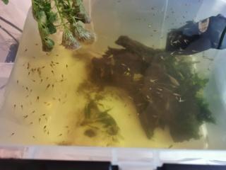 Transfert Paludarium 30L à 54L (crabes vampires)  Img_2021