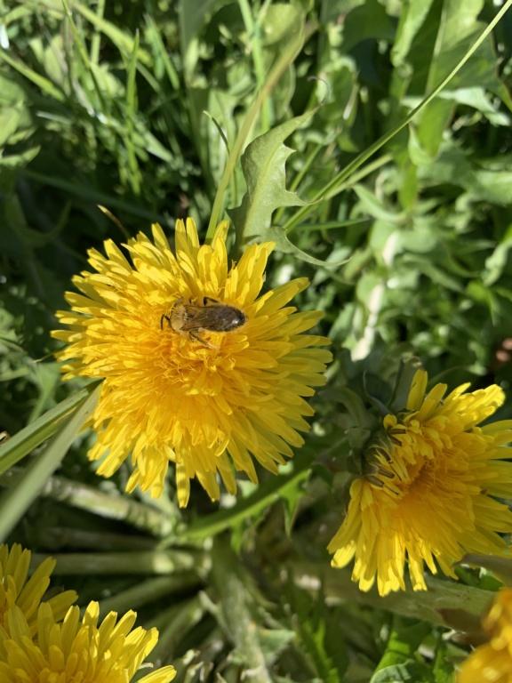Erste Frühlingsboten im Garten und in Wald und Flur - Seite 92 21c5bf10