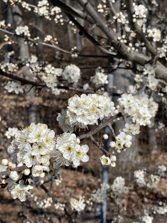 Erste Frühlingsboten im Garten und in Wald und Flur - Seite 92 A7f4dd10