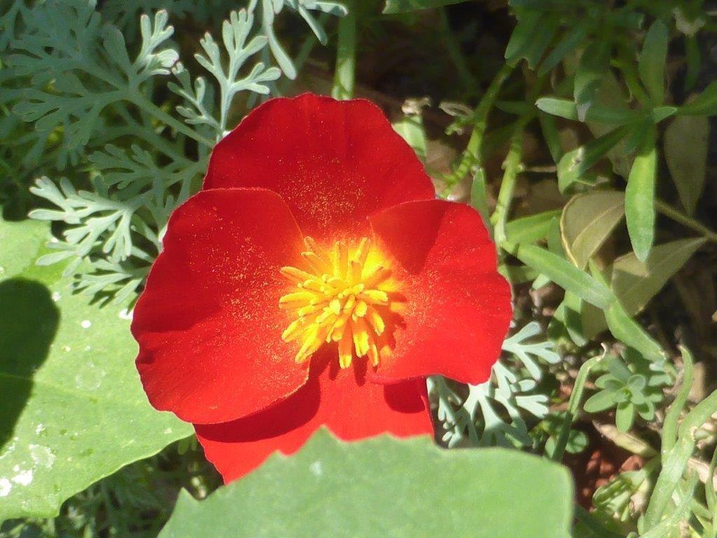 Wildblumen ( Sammelthread) - Seite 18 P1240947