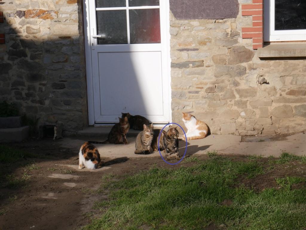 Chats déjà sortis du site de stérilisation en isolement / convalescence Mzele_15
