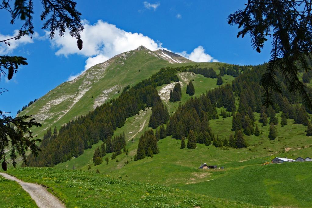 Montagne 16juin13