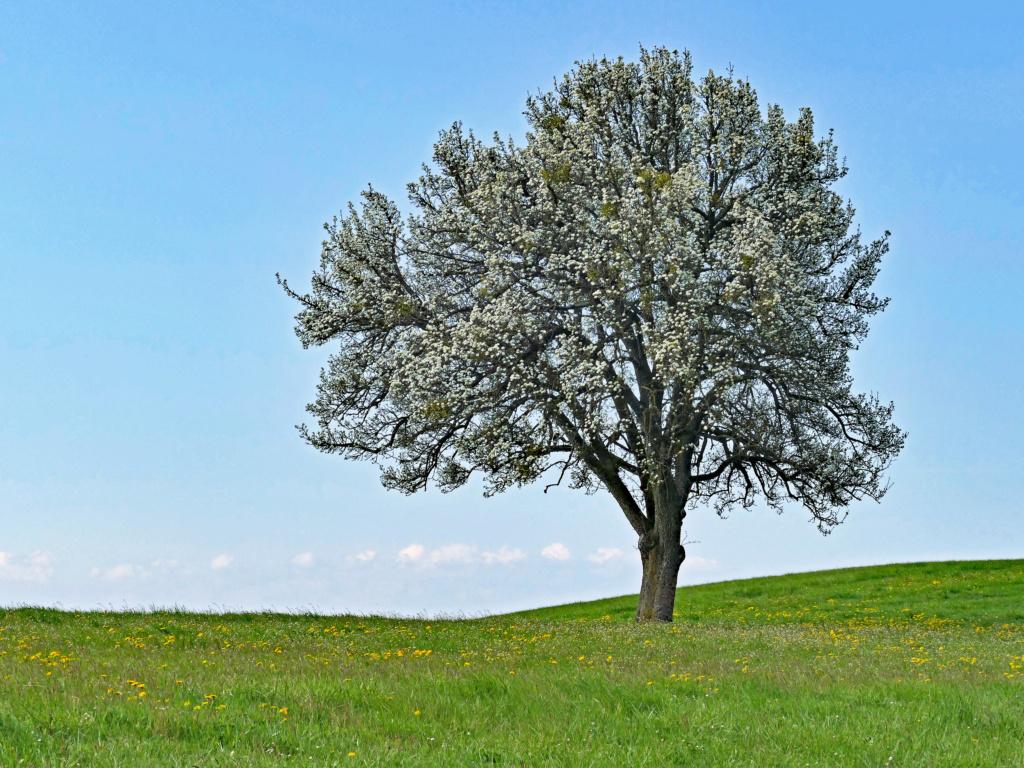 L'arbre L_arbr10