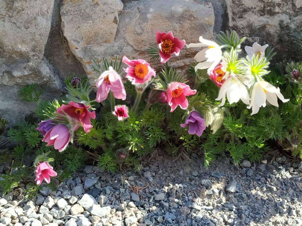 Erste Frühlingsboten im Garten und in Wald und Flur - Seite 94 Img-2011