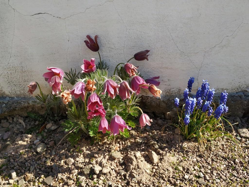 Erste Frühlingsboten im Garten und in Wald und Flur - Seite 94 Img-2012