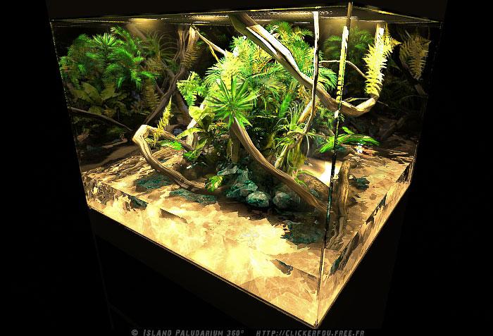 Projet paludarium naturel Island11