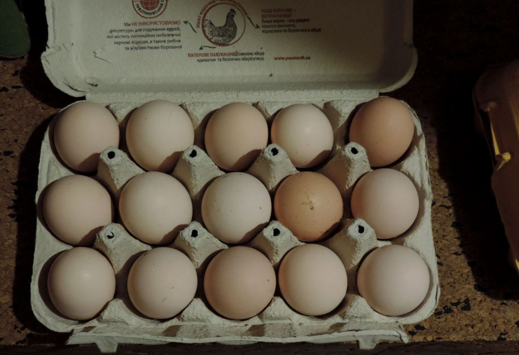 Гилянская порода кур, Gilan breed chickens - Страница 7 00125