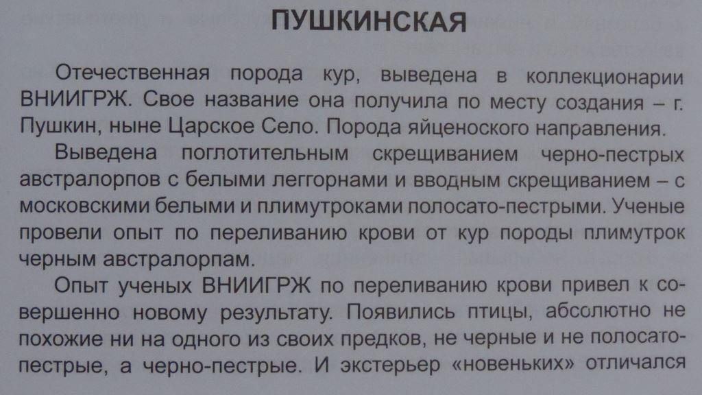 Пушкинская порода - Страница 4 00216