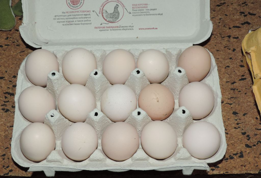 Гилянская порода кур, Gilan breed chickens - Страница 7 00228