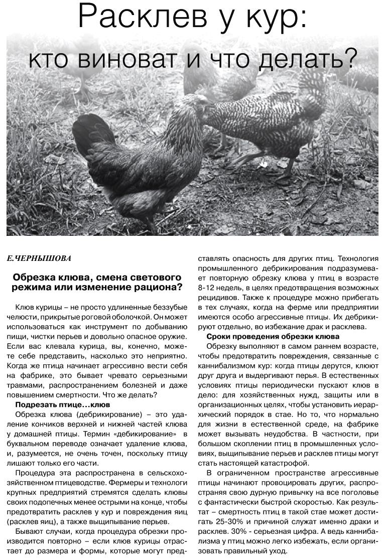 Советы новичку о курочках! - Страница 6 Image_10