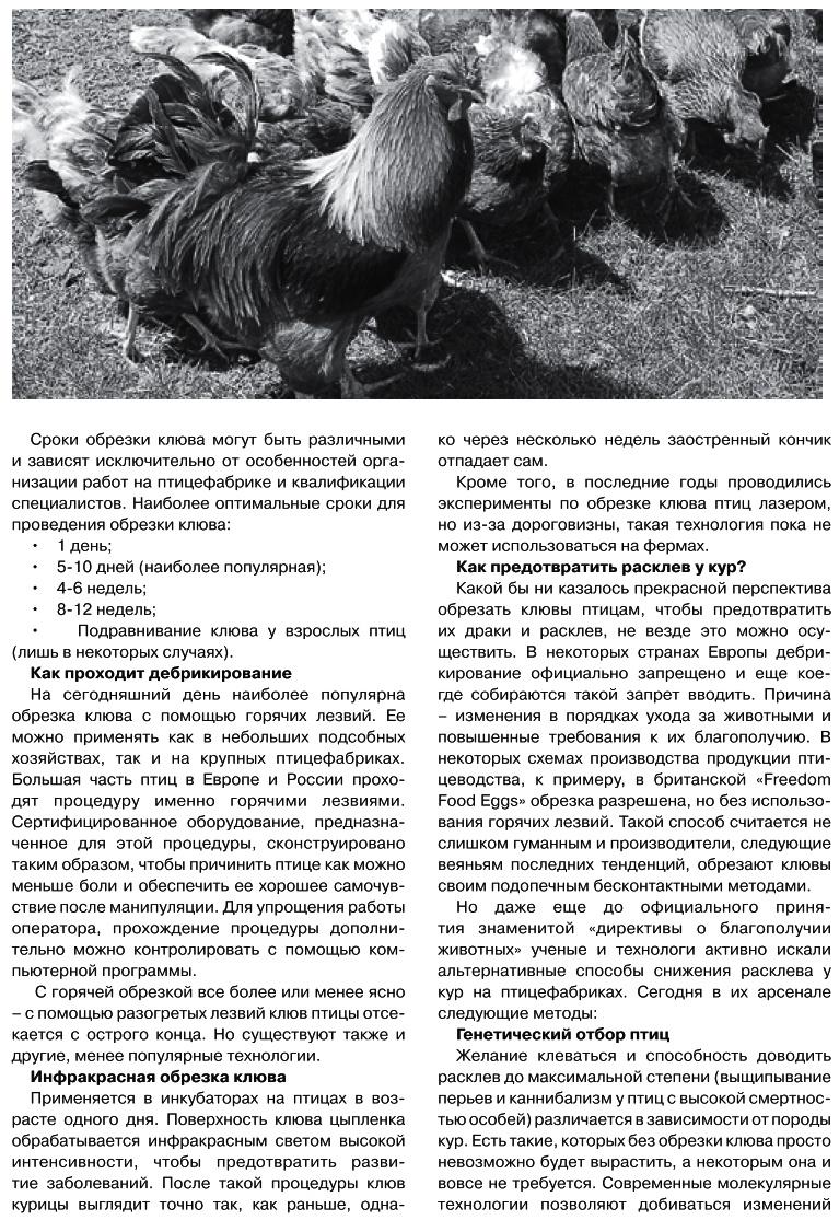 Советы новичку о курочках! - Страница 6 Image_11