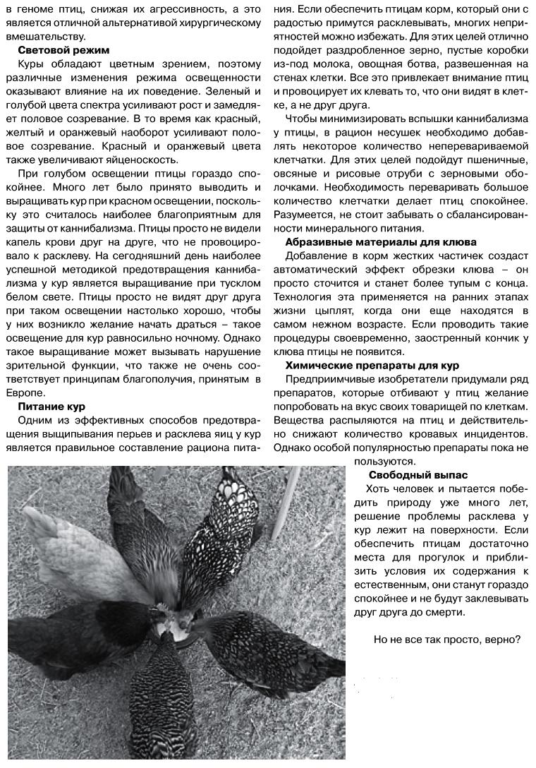 Советы новичку о курочках! - Страница 6 Image_12