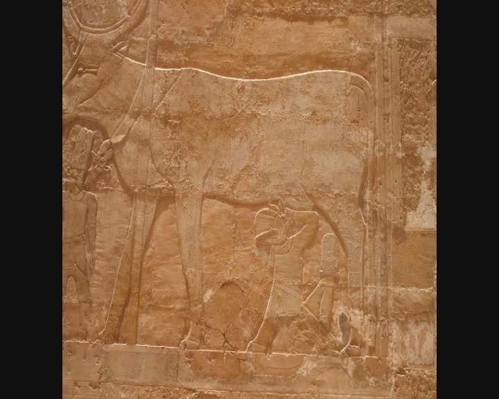 Voyage en Egypte Vts_0136