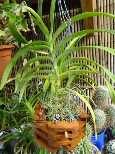 Orchideen-Neuzugang 2 - Seite 33 Dsc02713