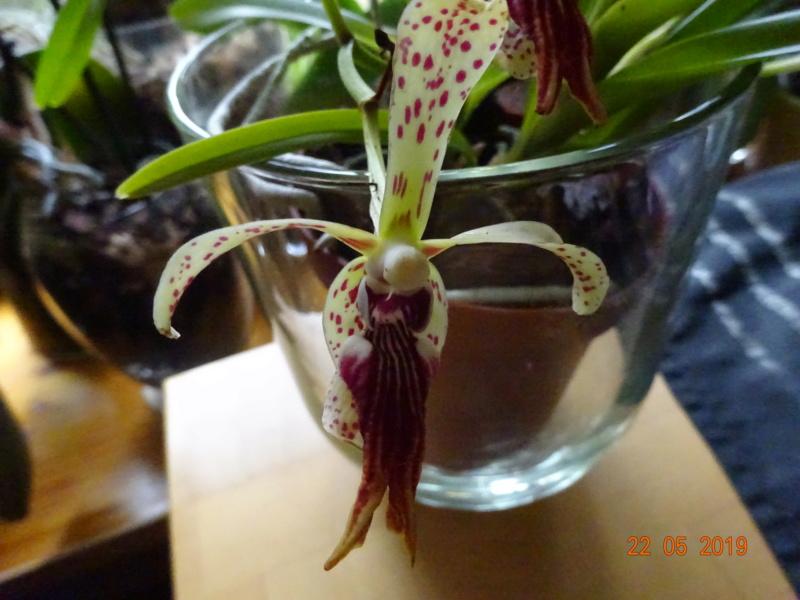 Orchideen-Neuzugang 2 - Seite 20 Lippe_11