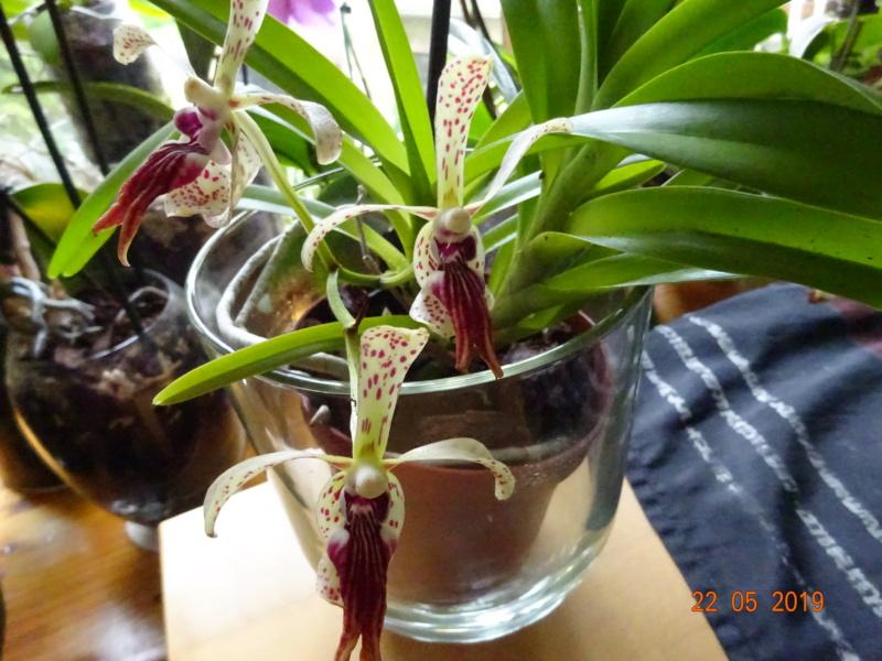 Orchideen-Neuzugang 2 - Seite 20 Lippe_13