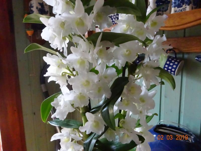 Orchideen-Neuzugang 2 - Seite 17 Neuerw10