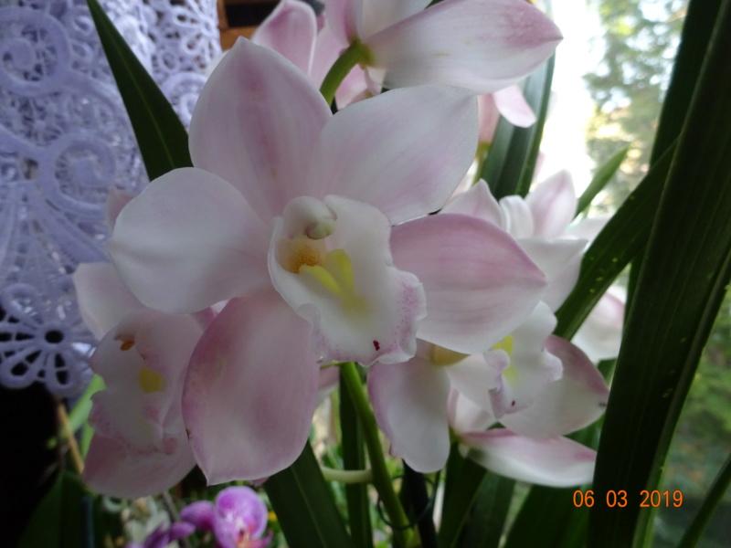 Orchideen-Neuzugang 2 - Seite 17 Neuerw11