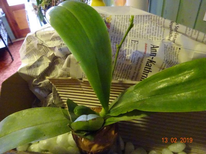 Orchideen-Neuzugang 2 - Seite 16 Neuzug11