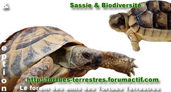 Espace réservé aux tortues