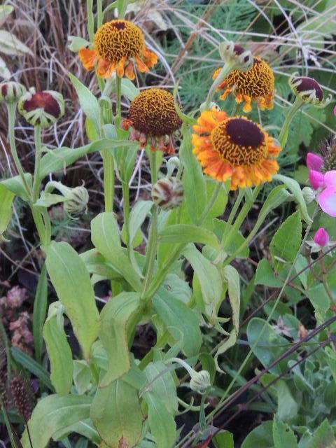 Les plantes des ami(e)s - Page 10 Dscn8711