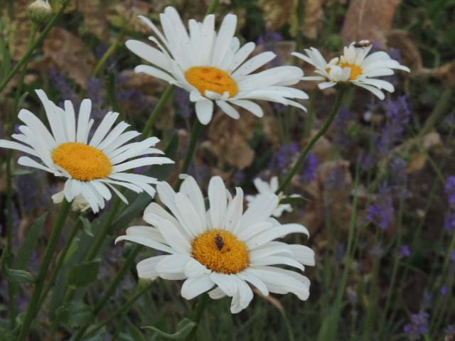 Les plantes des ami(e)s - Page 10 Dscn8712