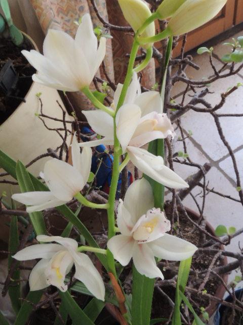 Les orchidées - Page 35 Dscn8816