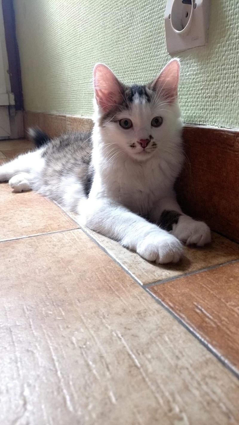 ONI, chaton mâle blanc et noir, né le 15/03/2018 48379710